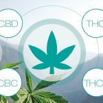Cibdol expanderar utbudet med banbrytande CBN- & CBG-oljor